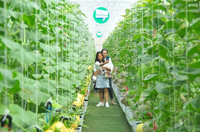 Mê mẩn vườn dưa lưới ở Cần Thơ thu hút đông bạn trẻ check-in dịp Tết - ảnh 9