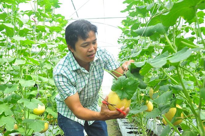 Mê mẩn vườn dưa lưới ở Cần Thơ thu hút đông bạn trẻ check-in dịp Tết - ảnh 11