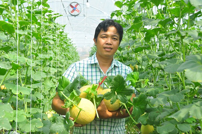 Mê mẩn vườn dưa lưới ở Cần Thơ thu hút đông bạn trẻ check-in dịp Tết - ảnh 14