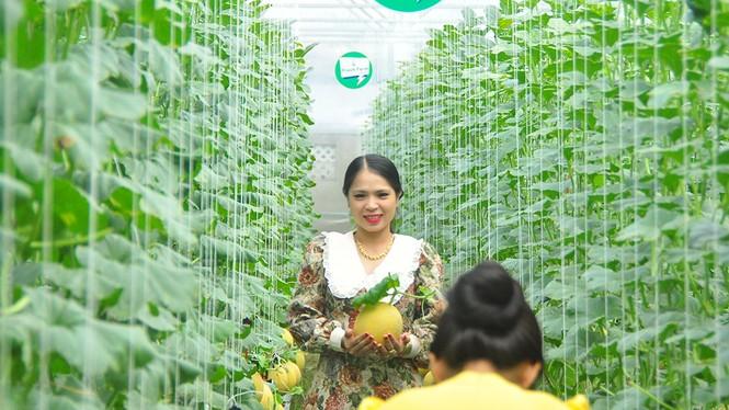Mê mẩn vườn dưa lưới ở Cần Thơ thu hút đông bạn trẻ check-in dịp Tết - ảnh 3