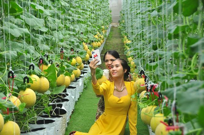 Mê mẩn vườn dưa lưới ở Cần Thơ thu hút đông bạn trẻ check-in dịp Tết - ảnh 4