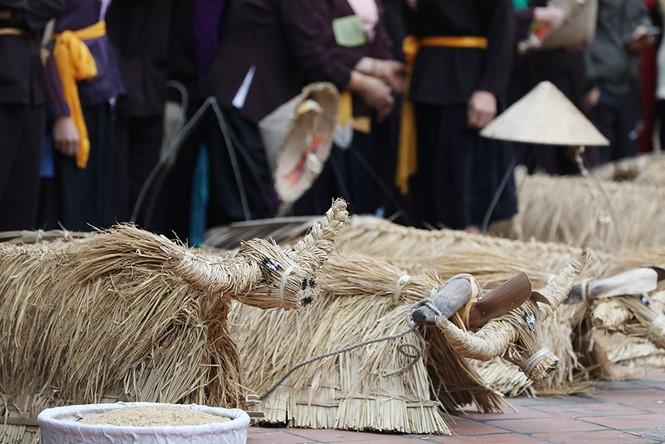 Độc đáo lễ hội trâu rơm bò rạ ngày xuân - ảnh 14