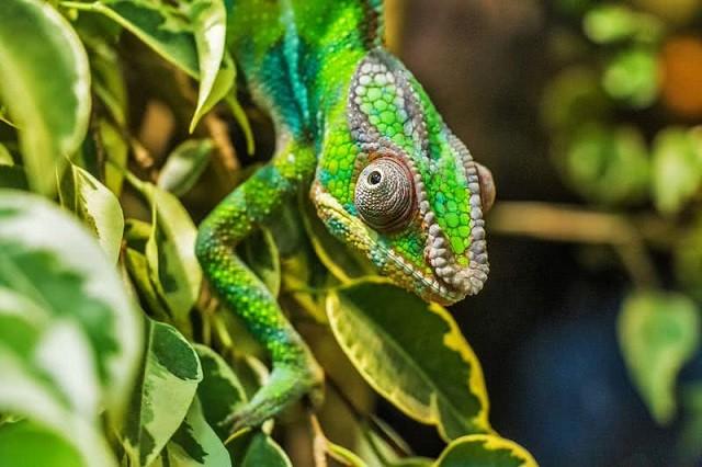 Top 10 loài động vật có đôi mắt độc đáo nhất thế giới - ảnh 9