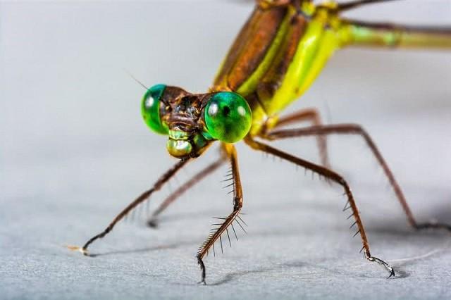 Top 10 loài động vật có đôi mắt độc đáo nhất thế giới - ảnh 7
