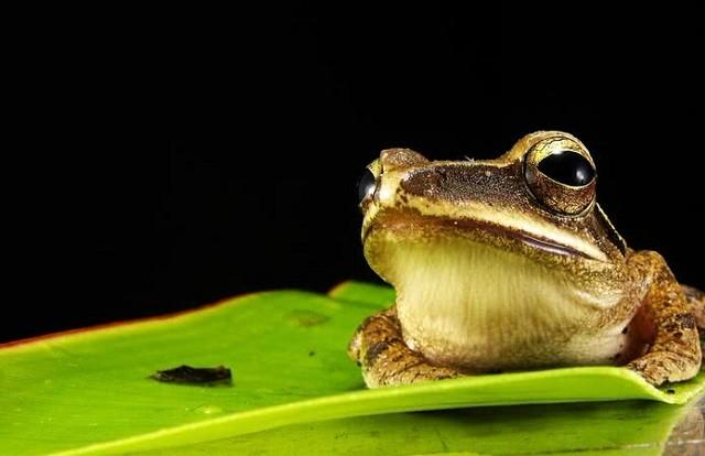 Top 10 loài động vật có đôi mắt độc đáo nhất thế giới - ảnh 1