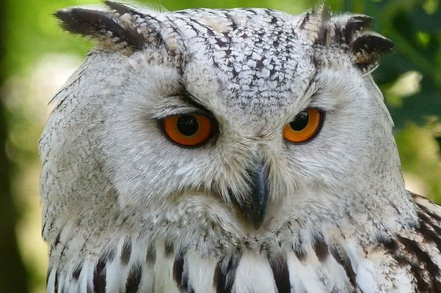 Top 10 loài động vật có đôi mắt độc đáo nhất thế giới - ảnh 8