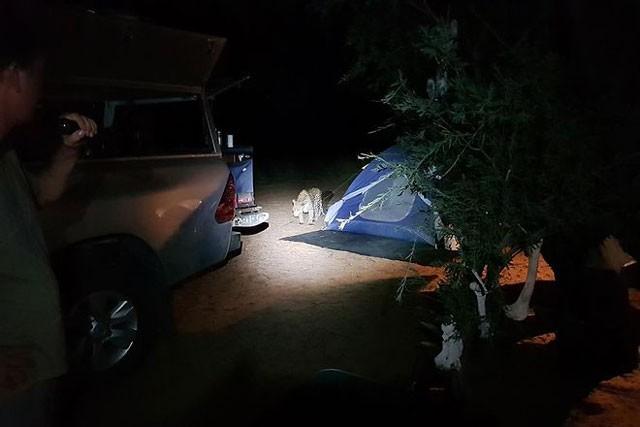 Báo hoa mai tấn công người cắm trại qua đêm - ảnh 2