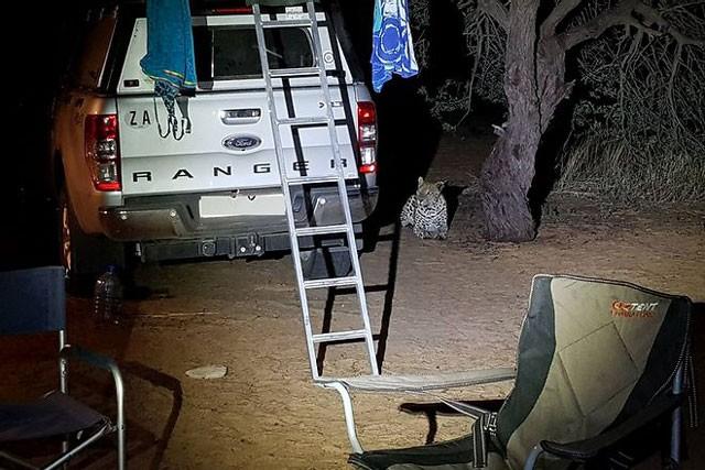 Báo hoa mai tấn công người cắm trại qua đêm - ảnh 3