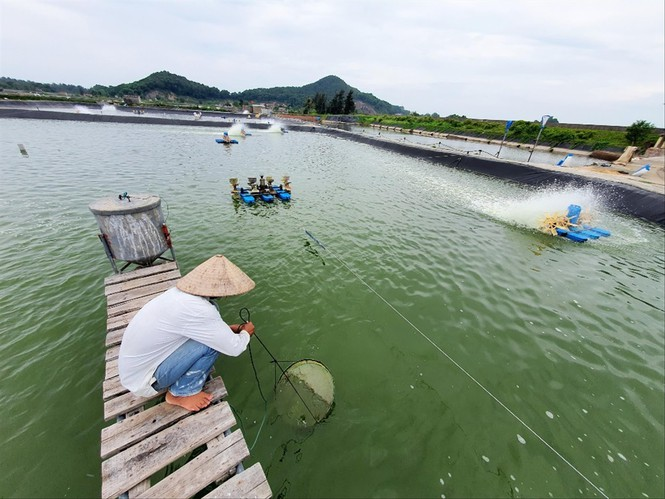 Tái lập dự án khai thác cát biển ở Quảng Ninh: Dân tiếp tục phản đối - ảnh 1