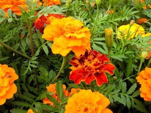 Muôn vàn tác dụng chữa bệnh của các loài hoa - ảnh 1