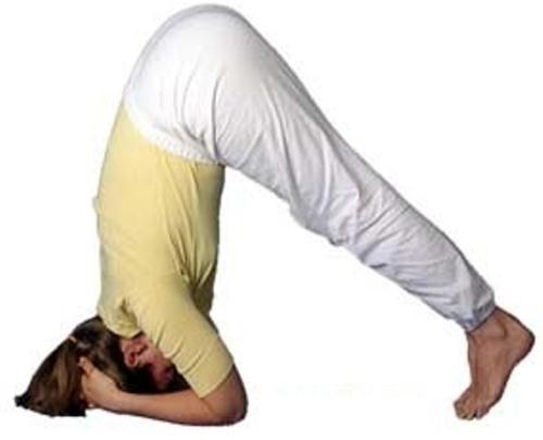 Cách trồng cây chuối trong yoga
