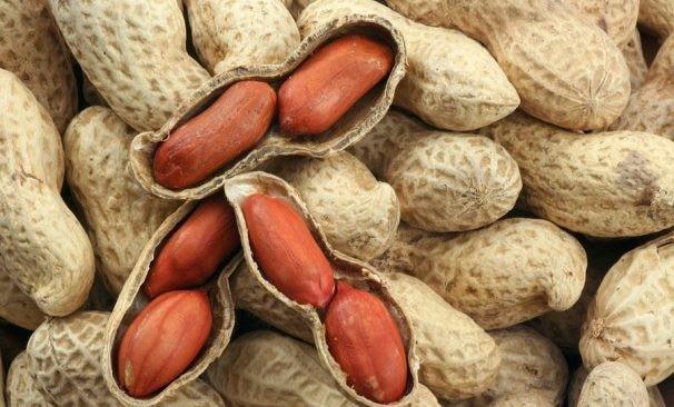 Những loại hạt vừa chữa bệnh vừa 'tốt gấp tỷ lần' thuốc bổ - ảnh 3