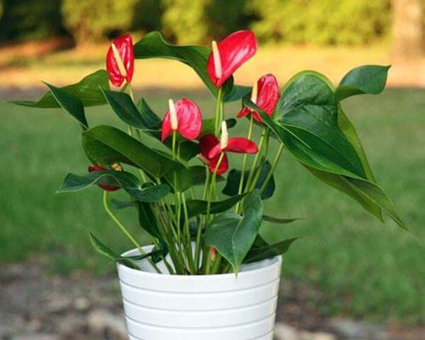 Những loại hoa đẹp rực rỡ nhưng có thể 'giết người' - ảnh 3