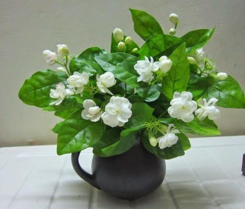 Những loại cây hoa vừa giúp ngủ ngon, vừa lọc sạch không khí ô nhiễm  - ảnh 2
