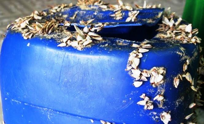 Lại phát hiện 21 bịch nylon nghi chứa heroin dạt vào bờ biển TT-Huế - ảnh 1
