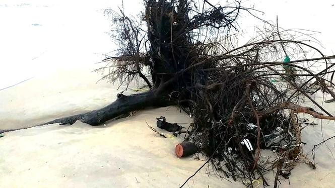 Bờ biển Phú Thuận, TT-Huế, bị xâm thực nghiêm trọng phải di dời dân - ảnh 6