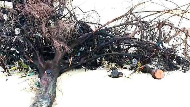 Bờ biển Phú Thuận, TT-Huế, bị xâm thực nghiêm trọng phải di dời dân - ảnh 7