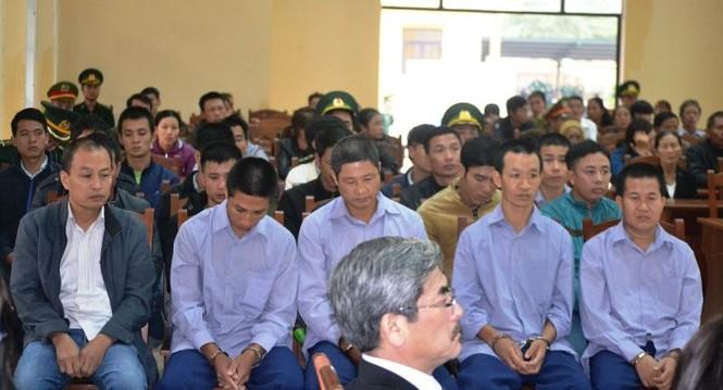 Xét xử 21 đồng phạm vụ phá rừng pơ mu ở Quảng Nam - ảnh 2