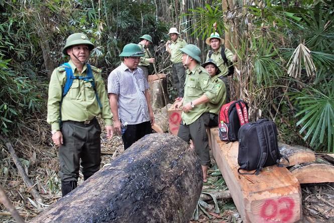 Hàng loạt cán bộ kiểm lâm Quảng Nam nộp nghỉ việc do áp lực trách nhiệm công việc - ảnh 1