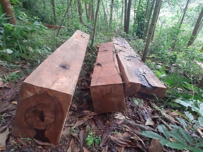 Rừng phòng hộ Sông Tranh bị tàn phá  - ảnh 1