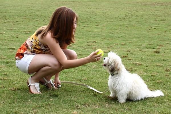 """Hãy thông cảm khi cún cưng cũng trải qua """"tuổi dậy thì"""" khó khăn như chúng ta vậy - ảnh 2"""