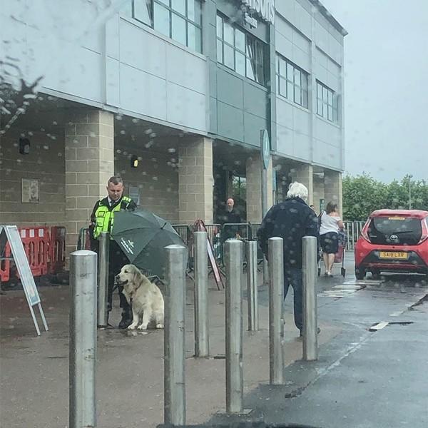 Hình ảnh đẹp về anh bảo vệ chịu ướt, dùng ô che mưa cho chó khiến netizen rung động - ảnh 1