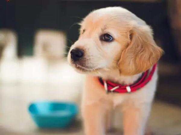 """Một chú chó được gọi là """"tốt bụng nhất thế giới"""" vì đã hiến máu cứu bạn - ảnh 1"""