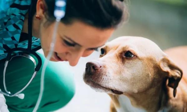 """Một chú chó được gọi là """"tốt bụng nhất thế giới"""" vì đã hiến máu cứu bạn - ảnh 2"""