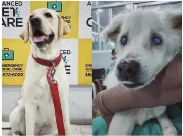 """Một chú chó được gọi là """"tốt bụng nhất thế giới"""" vì đã hiến máu cứu bạn - ảnh 3"""