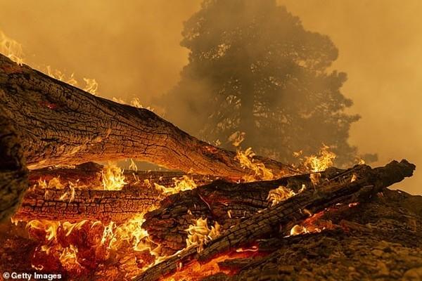 Chụp ảnh với bầu trời màu cam do cháy rừng để bán váy màu cam: Vô duyên hay nghệ thuật? - ảnh 3