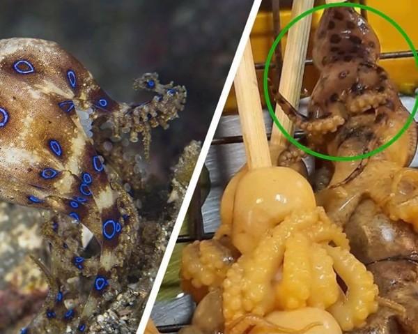Quầy hàng xiên nướng ở Thái Lan bán bạch tuộc siêu độc, có thể gây tử vong trong nháy mắt - ảnh 2