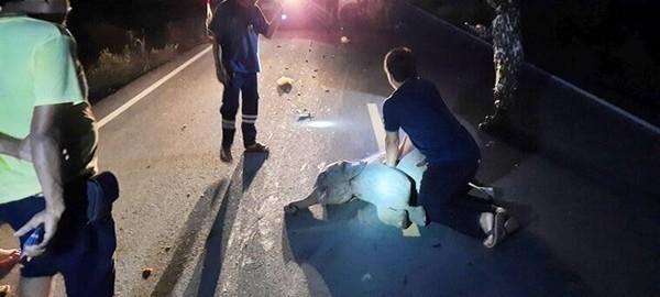 Chú voi con bị xe máy đâm khi sang đường, may gặp đúng bác sĩ thực hiện hồi sức tim phổi - ảnh 1