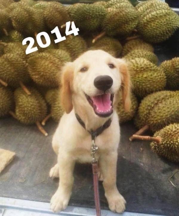 """""""Chủ"""" sạp sầu riêng dễ thương nhất thế giới: Chú chó trông """"sầu"""" mà chẳng sầu, lúc nào cũng cười - ảnh 2"""