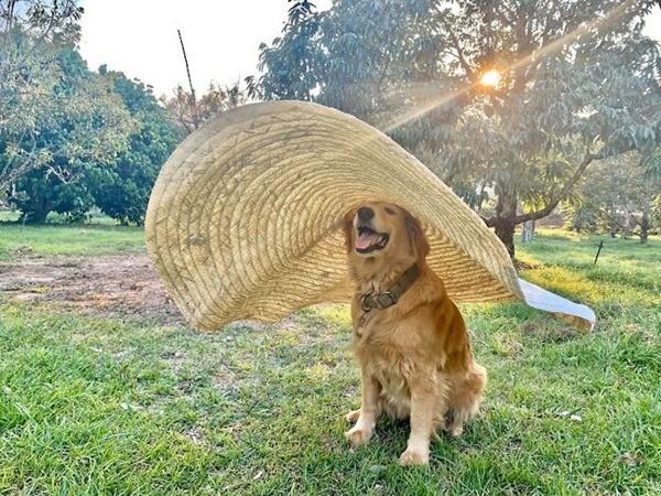 """""""Chủ"""" sạp sầu riêng dễ thương nhất thế giới: Chú chó trông """"sầu"""" mà chẳng sầu, lúc nào cũng cười - ảnh 3"""