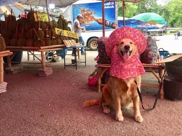 """""""Chủ"""" sạp sầu riêng dễ thương nhất thế giới: Chú chó trông """"sầu"""" mà chẳng sầu, lúc nào cũng cười - ảnh 4"""