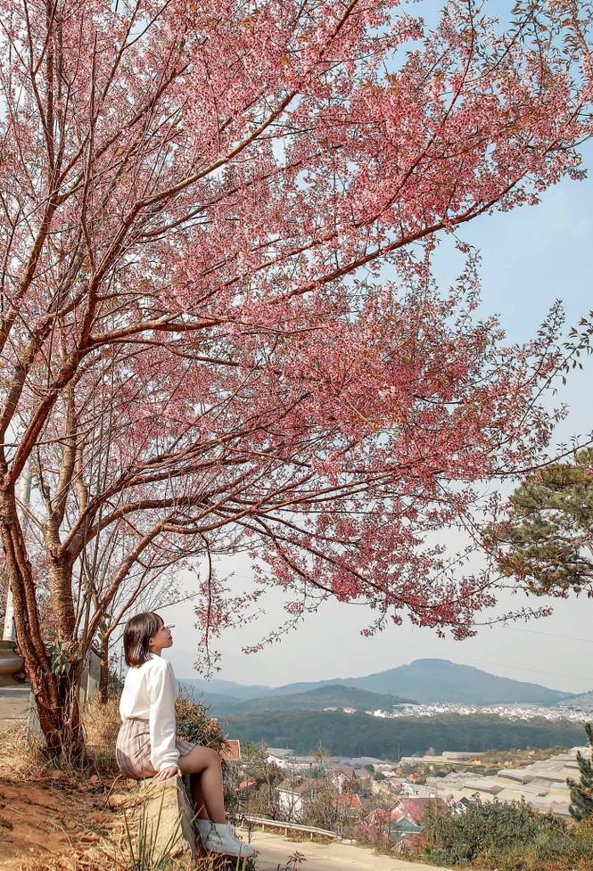 Đi đâu đón 2021? Mời bạn ghé thăm những con đường ngập tràn hoa anh đào ở Đà Lạt - ảnh 6