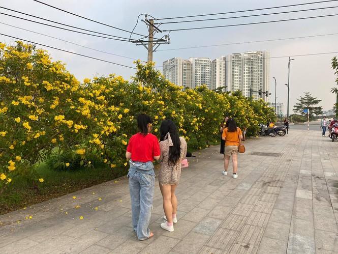 Con đường hoa hoàng yến rực rỡ một góc trời, teen Sài thành rủ nhau check-in đón Tết - ảnh 3