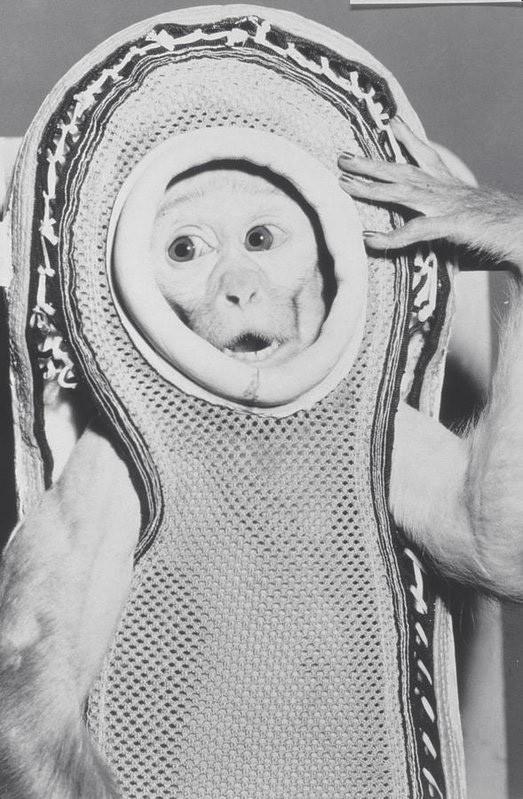 Kỳ thú chuyện khỉ Sam trở về từ vũ trụ làm loạn khu trục hạm của Mỹ - ảnh 2