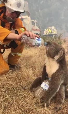 Gần nửa tỷ động vật có vú, chim và bò sát chết thảm trong vụ cháy rừng ở Úc - ảnh 6