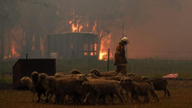 Gần nửa tỷ động vật có vú, chim và bò sát chết thảm trong vụ cháy rừng ở Úc - ảnh 2