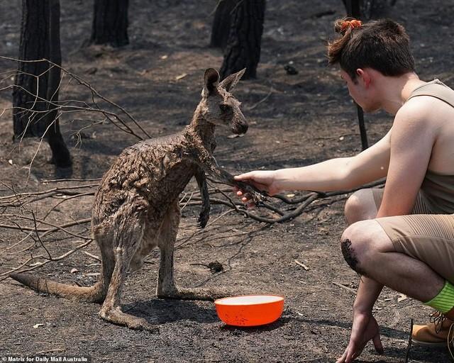 Gần nửa tỷ động vật có vú, chim và bò sát chết thảm trong vụ cháy rừng ở Úc - ảnh 9