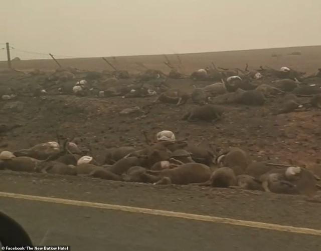 Gần nửa tỷ động vật có vú, chim và bò sát chết thảm trong vụ cháy rừng ở Úc - ảnh 10