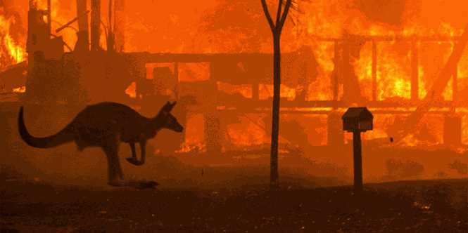 Gần nửa tỷ động vật có vú, chim và bò sát chết thảm trong vụ cháy rừng ở Úc - ảnh 5