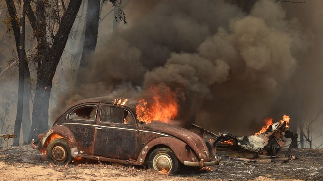 Gần nửa tỷ động vật có vú, chim và bò sát chết thảm trong vụ cháy rừng ở Úc - ảnh 1