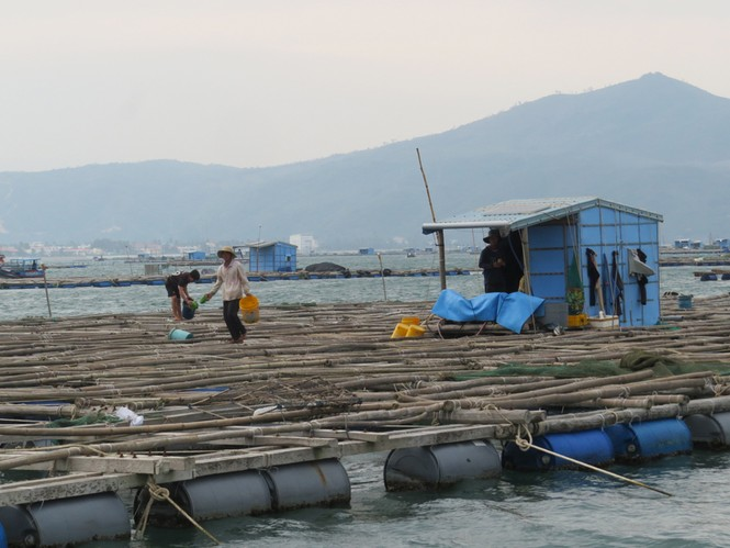 Phú Yên: 10.000 người phải cấp tốc rời khỏi 91.000 lồng bè trước trưa nay  - ảnh 2