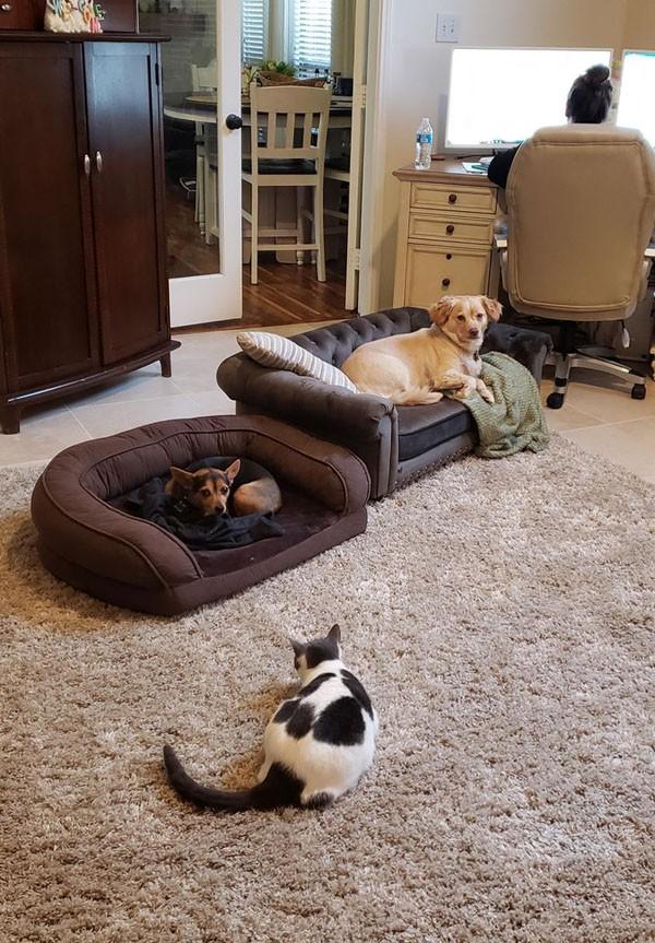 Chú chó bất ngờ nổi tiếng khi nằm ngủ trên sofa lúc chủ nhân dẫn bản tin trên truyền hình - ảnh 4