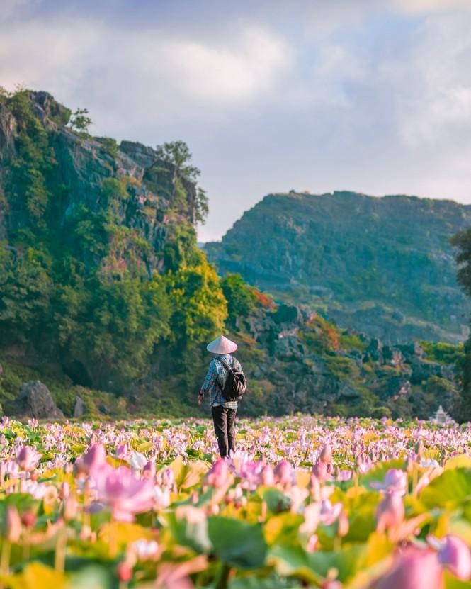 Ninh Bình sau dịch COVID-19: Đầm sen Hang Múa là điểm nhấn thu hút khách du lịch - ảnh 2