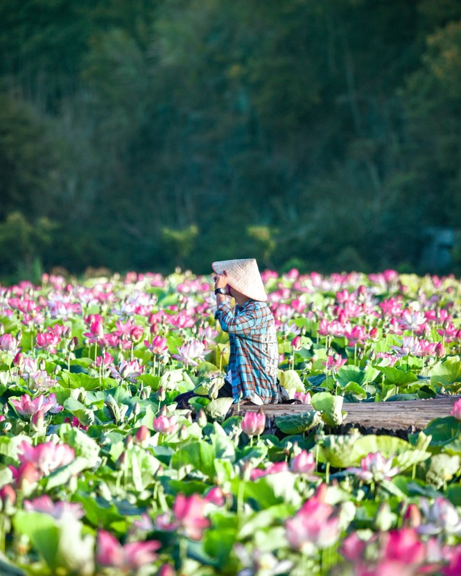 Ninh Bình sau dịch COVID-19: Đầm sen Hang Múa là điểm nhấn thu hút khách du lịch - ảnh 5