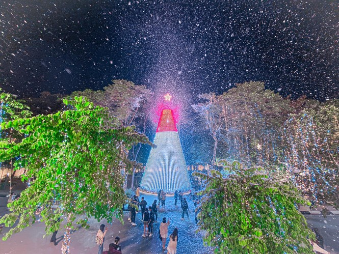 Hà Nội: Đại học Thăng Long có cây thông