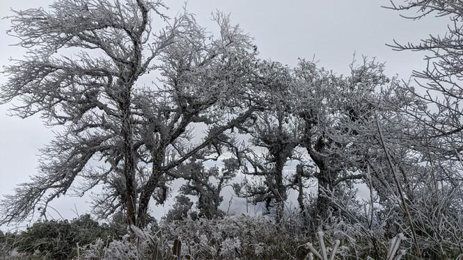 Băng giá phủ trắng một số nơi ở vùng núi phía Bắc, team săn tuyết lên đường ngay thôi! - ảnh 1